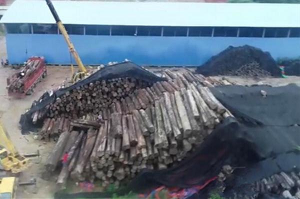一周红木天下事:云南10万吨走私木材被查 价值高达数亿元